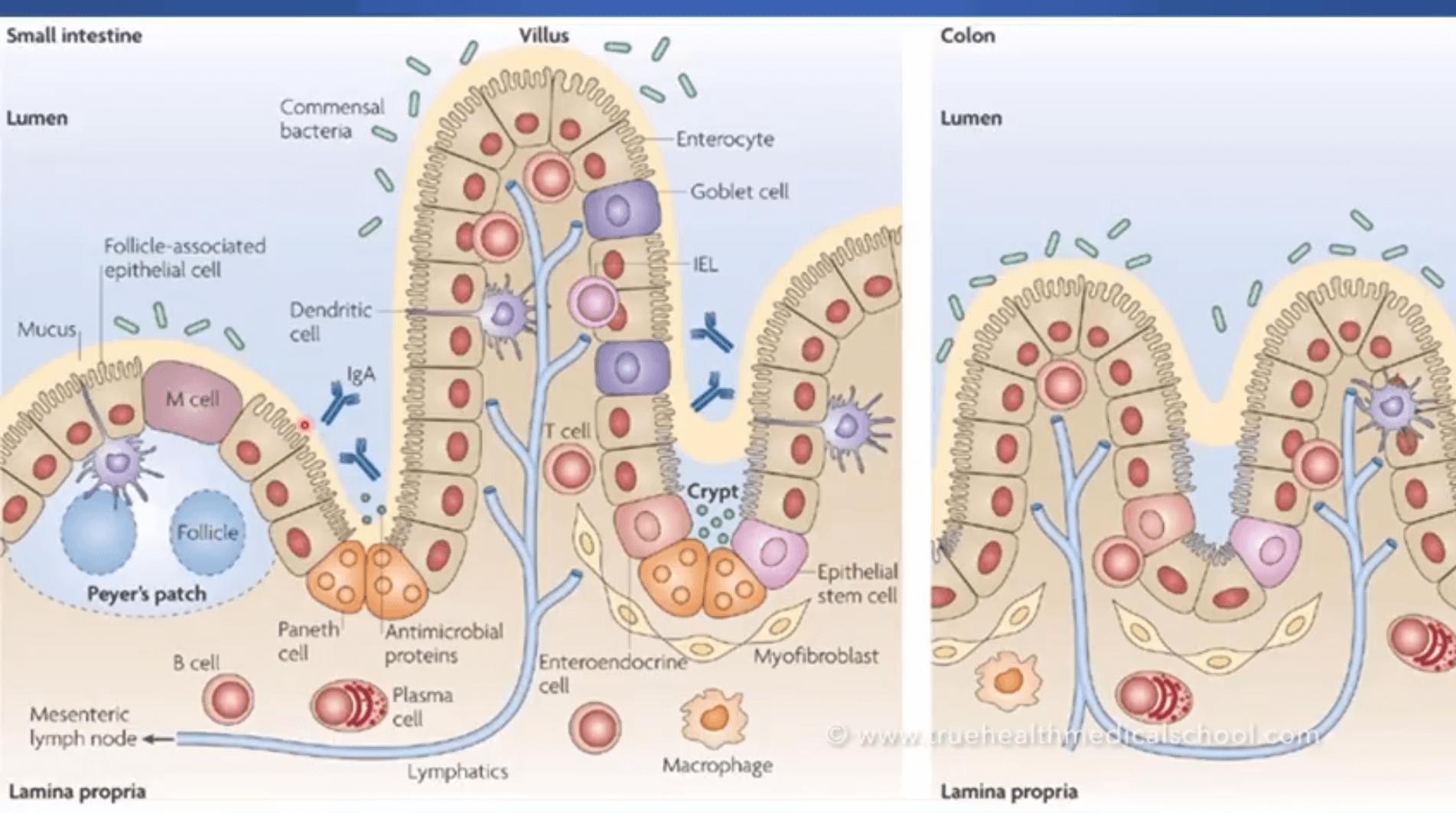 Five anti oxidative trace elements – YouTube